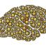 emozioni cervello